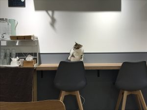Patch Cafe(補丁咖啡)の猫