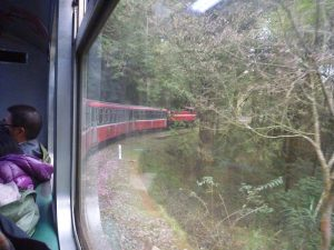 阿里山鉄道の車窓の様子