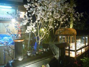阿里山で夜桜と一緒にライトアップされたプラレール